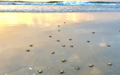 Review Jennae and her family – Turtle Conservation Project