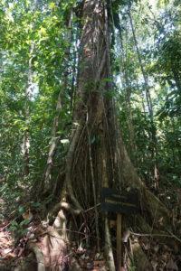 Reforestation3_GLV