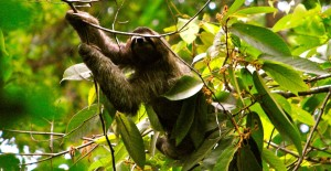 Learn Spanish in Costa Rica with Green Life Volunteers