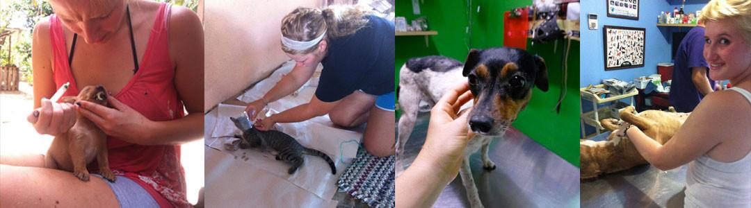 Veterinary Intern / Volunteer