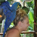 New Project Added – Large Parrot Breeding & Rescue Center