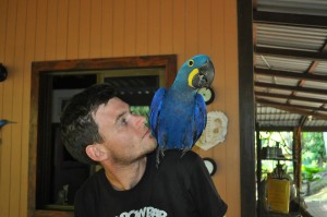Volunteer with Hyacinth Macaw