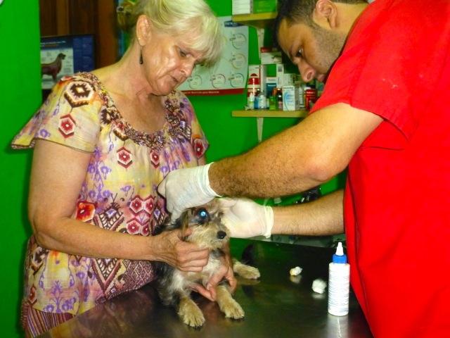 Veterinary Volunteer