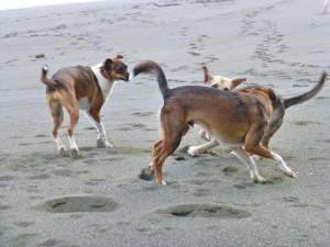 dogsbeach