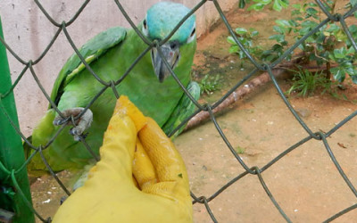 Review Dominical Wildlife Rescue Center
