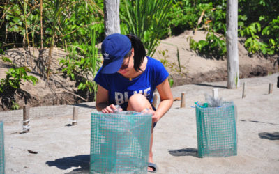 Turtle Conservation Project Review by Jazzy