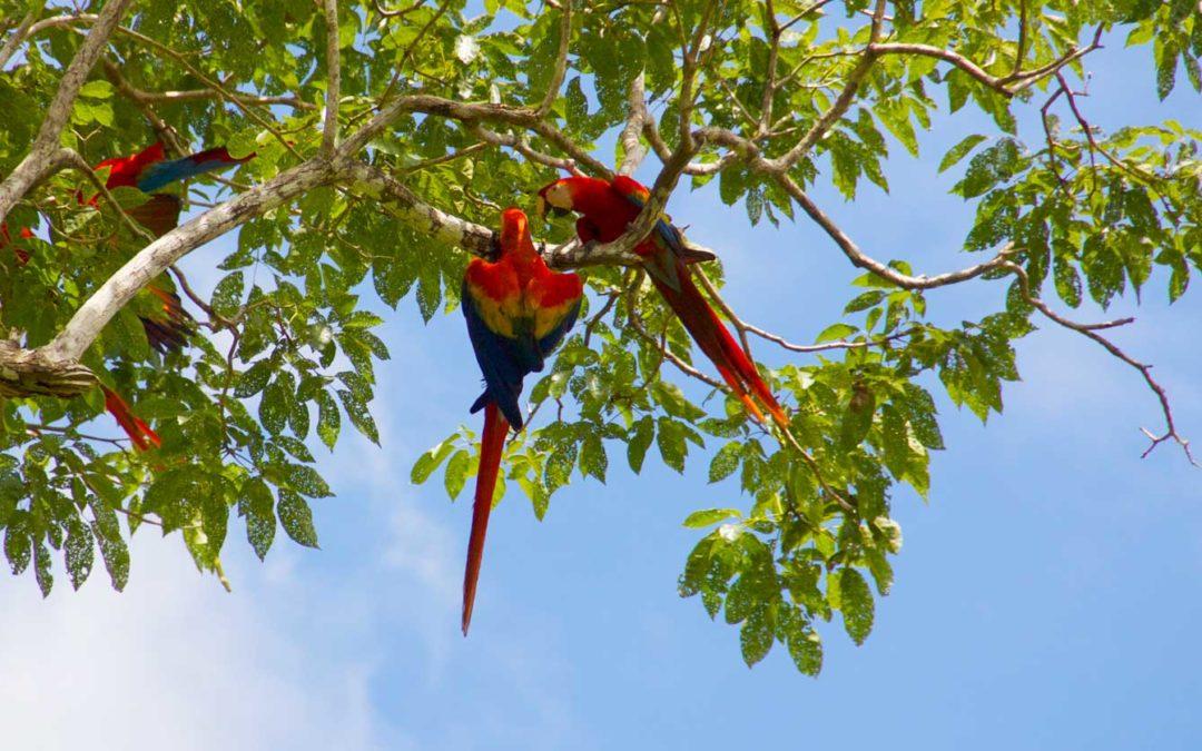 Parrot Rescue Project