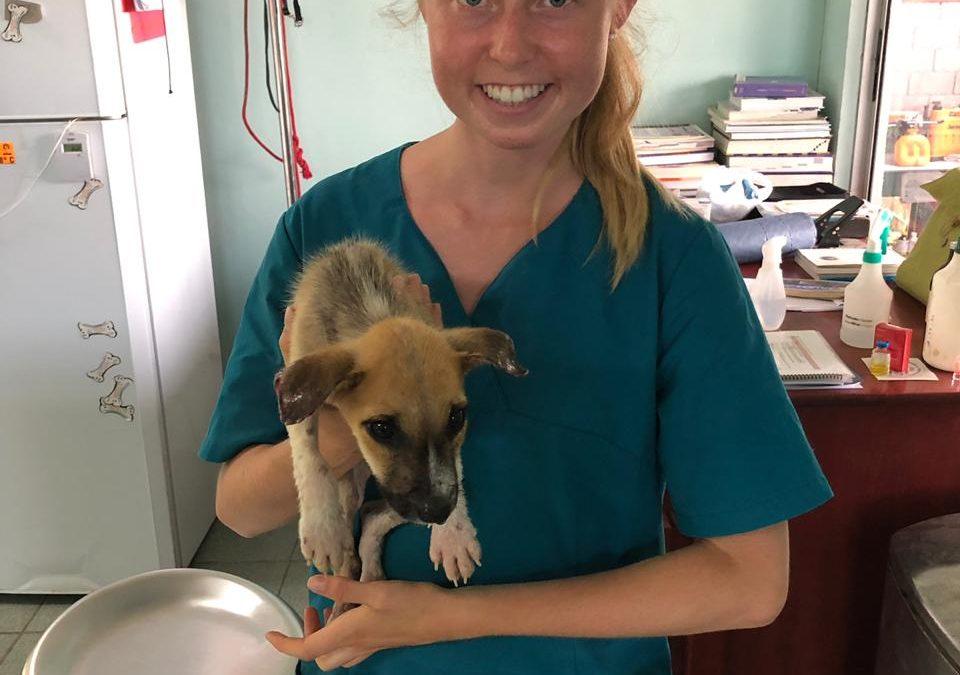 Annika – Veterinary Intern – May 2019
